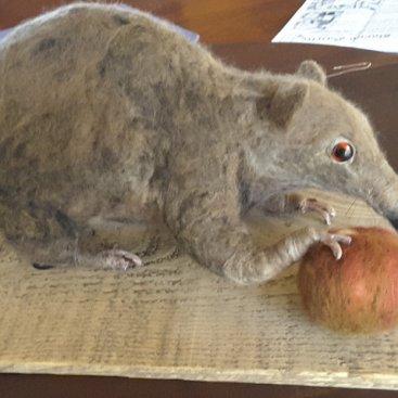 Beverley Prideaux, Western Australia. Needle felted endangered marsupial 'Quenda'
